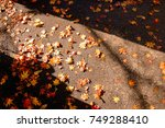 the changing color of the trees ... | Shutterstock . vector #749288410