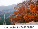 the changing color of the trees ... | Shutterstock . vector #749288488