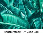 Tropical Banana Leaf Texture ...