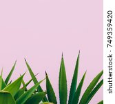 plant o pink. outdoors. minimal ... | Shutterstock . vector #749359420