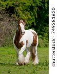 red and white gypsy horse... | Shutterstock . vector #749381620