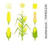 vector set yellow corn in flat... | Shutterstock .eps vector #749401234