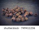 medlar fruit | Shutterstock . vector #749411236