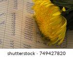 yellow lush flower | Shutterstock . vector #749427820