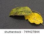 yellow leaves | Shutterstock . vector #749427844