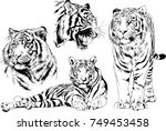 set of vector drawings on the... | Shutterstock .eps vector #749453458