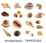 A Collection Seashell From Beach - Fine Art prints