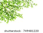 tree branch with green leaves... | Shutterstock . vector #749481220