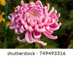 Close Up Purple Flower Macro