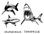 graphical set of sharks ... | Shutterstock .eps vector #749499118