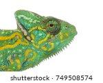 headshot of a yemen chameleon   ... | Shutterstock . vector #749508574