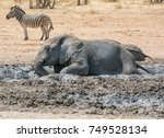 An African Elephant Enjoying A...