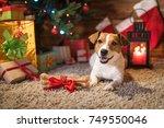 dog jack russel under a... | Shutterstock . vector #749550046