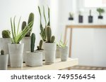 Small photo of The modern interior of a room filled a lot of cacti in different handmade cement pots on the brown table.The room of nature lover.