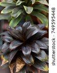 striped leaves | Shutterstock . vector #749595448