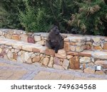cape baboon in south africa | Shutterstock . vector #749634568