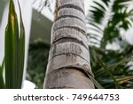 tree trunk close up of... | Shutterstock . vector #749644753