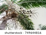 tree trunk and leaf of... | Shutterstock . vector #749644816