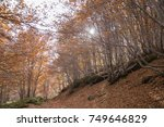 colorful forest in the etna... | Shutterstock . vector #749646829
