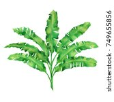 watercolor painting green...   Shutterstock . vector #749655856