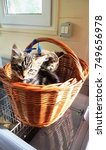 Stock photo kittens in a basket 749656978