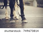 Horse Drawn Transport. Legs Of...