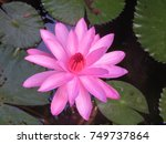 water lily  | Shutterstock . vector #749737864