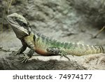 eastern water dragon  full... | Shutterstock . vector #74974177