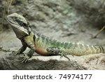 eastern water dragon  full...   Shutterstock . vector #74974177