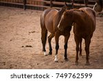 two horses nuzzling. | Shutterstock . vector #749762599