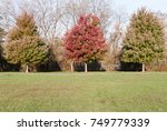daytime running path with... | Shutterstock . vector #749779339