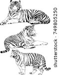 set of vector drawings on the... | Shutterstock .eps vector #749805250