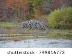beaver lodge in a wetland...   Shutterstock . vector #749816773