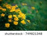 cosmos flower | Shutterstock . vector #749821348