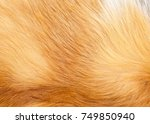 Textures Red Fox Fur. Red Fox...