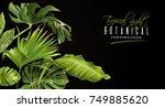 vector botanical horizontal... | Shutterstock .eps vector #749885620