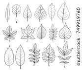 vector leaves of different... | Shutterstock .eps vector #749919760