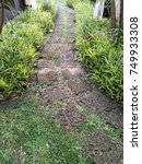 Small photo of Shape of laterite walkway in the garden