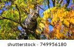 Stock photo cat ready to jump 749956180