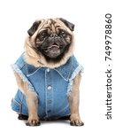 joyful little pug in a cute ... | Shutterstock . vector #749978860