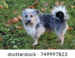 dog stand alone on the three...   Shutterstock . vector #749997823