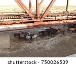 Horses Under The Railway Bridge....