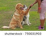Stock photo  training dogs overcame his fears about human 750031903
