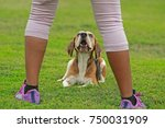 Stock photo  training dogs overcame his fears about human 750031909