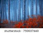 autumn forest on misty morning  | Shutterstock . vector #750037660