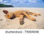 Dog Sleeping On The Beach. - stock photo