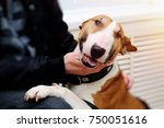 happy bull terrier in line to... | Shutterstock . vector #750051616