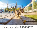 cat  in istanbul  turkey in a... | Shutterstock . vector #750068590