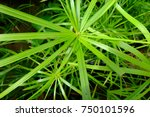 The Bright Green Background Of...