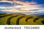 rice fields on terraced of...   Shutterstock . vector #750126883